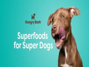 Hungry-Bark