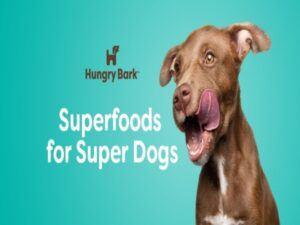 hungry-bark